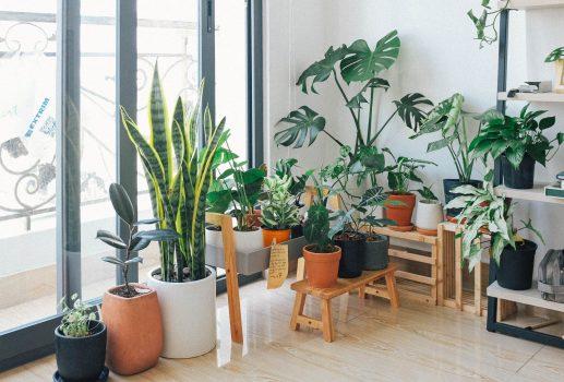 plantas para tu espacio